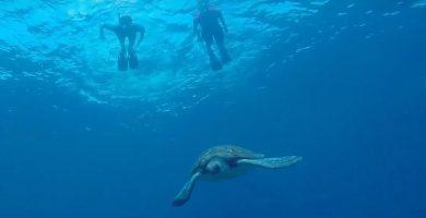 snorkel tortugas tenerife