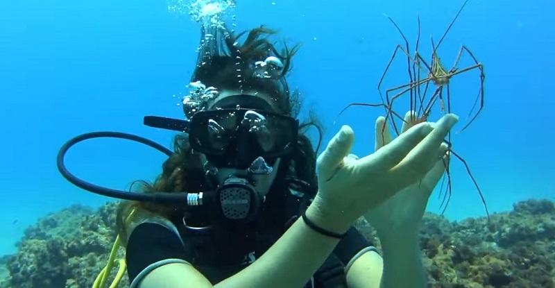 fauna marina bautismo tenerife