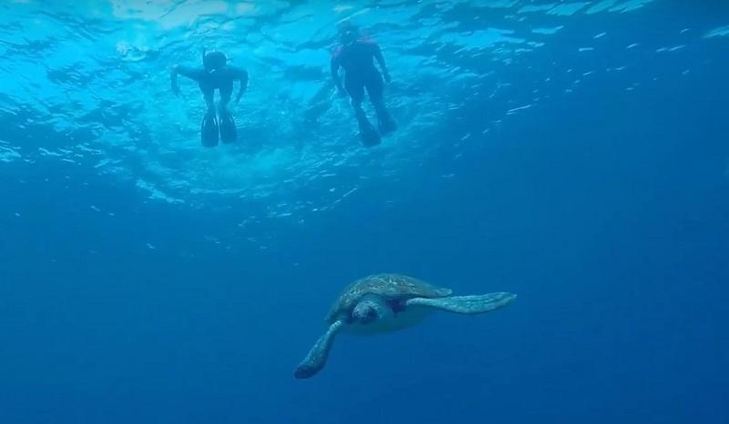 Nager avec les tortues tenerife snorkeling
