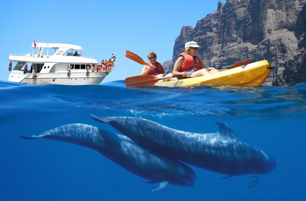 kayak los gigantes avistamiento cetaceos